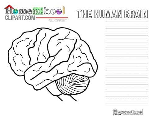 Brain Crafts & Activities - The Crafty Classroom
