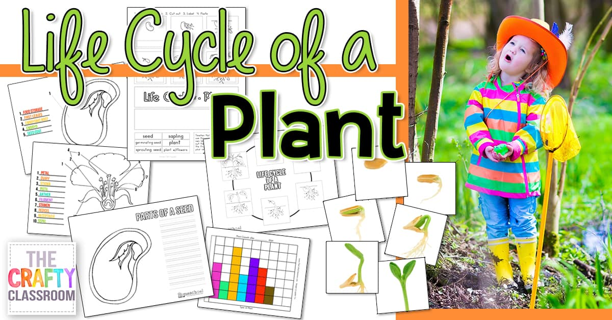Seed To Plant Coloring Amp Worksheet The Crafty Classroom