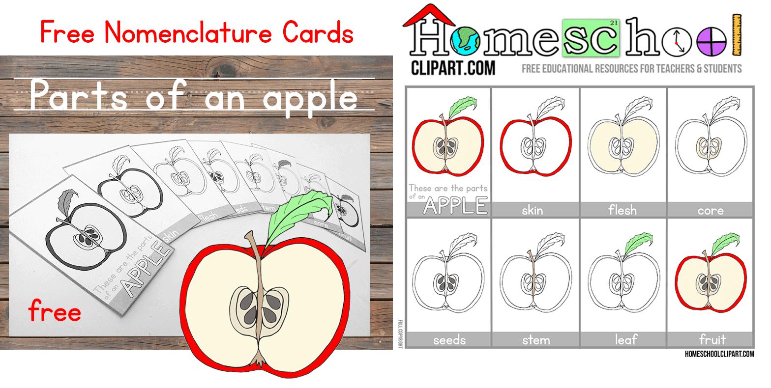AppleCardsHeader