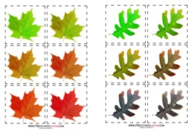 LeafColorSequence