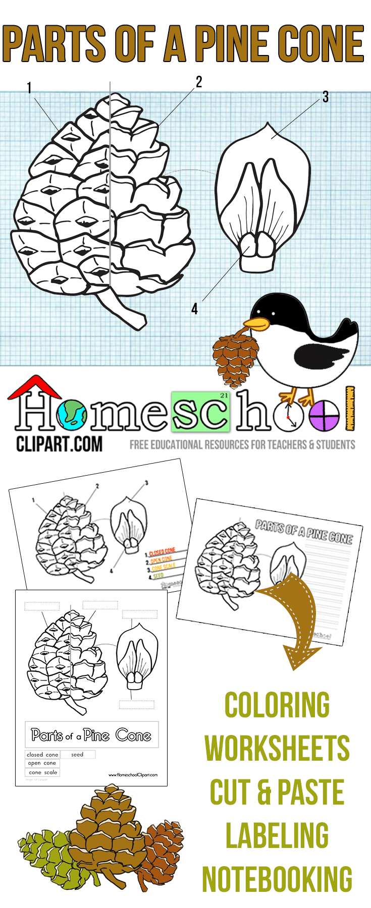 Pine Cone Science Printables - The Crafty Classroom
